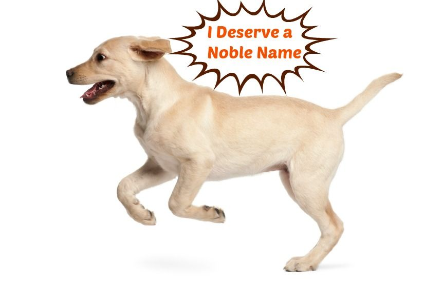 40 Powerful Dog Names For Your Loyal Noble Guard Dog Dog Names Strong Dog Names Famous Dogs