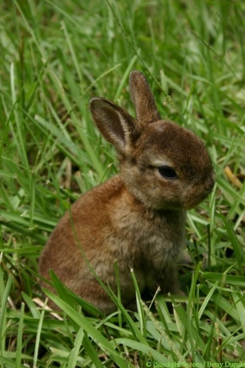 Baby Bunny Via Painfully Cute Cute Animals Cute Baby Animals