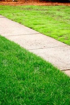 Before You Toss Grass Seed Onto Those Bare Spots Soak It In A Bucket Overnight With Some Beer The Beer Helps Pre Spring Lawn Care Lawn Care Lawn Maintenance