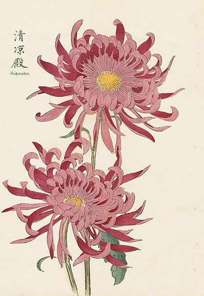 Vintage Japanese Woodblock Prints Japanese Woodblock Printing Flower Art Botanical Prints