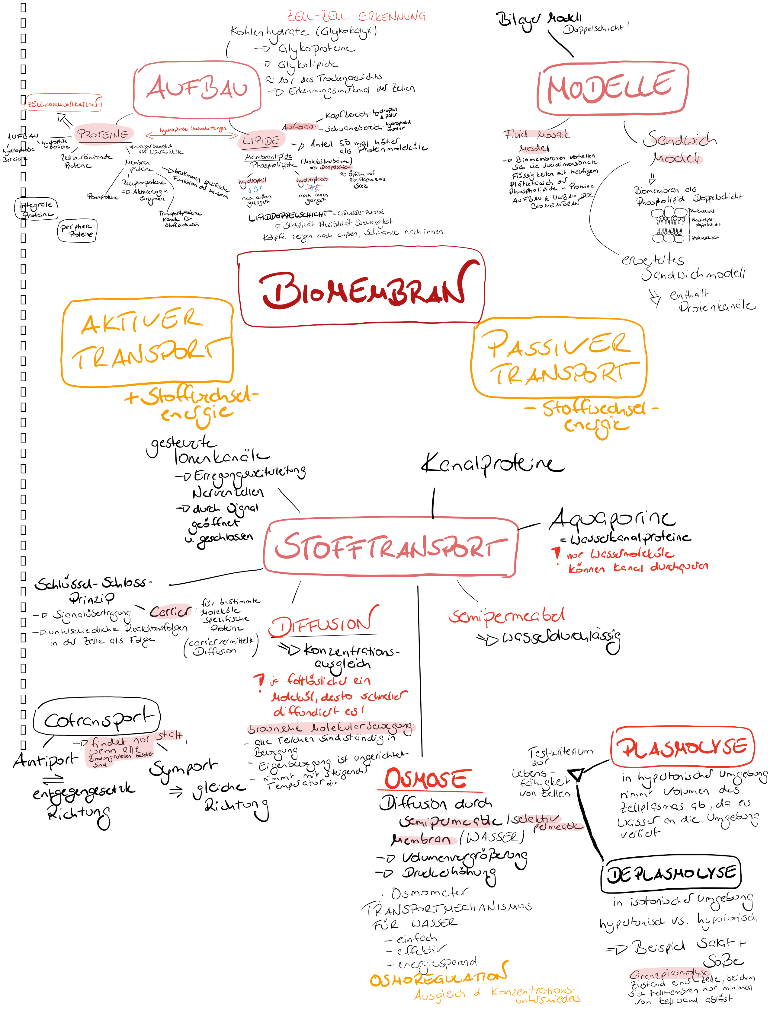 20 Biokelli Ideen   biologie, biologie unterrichten ...