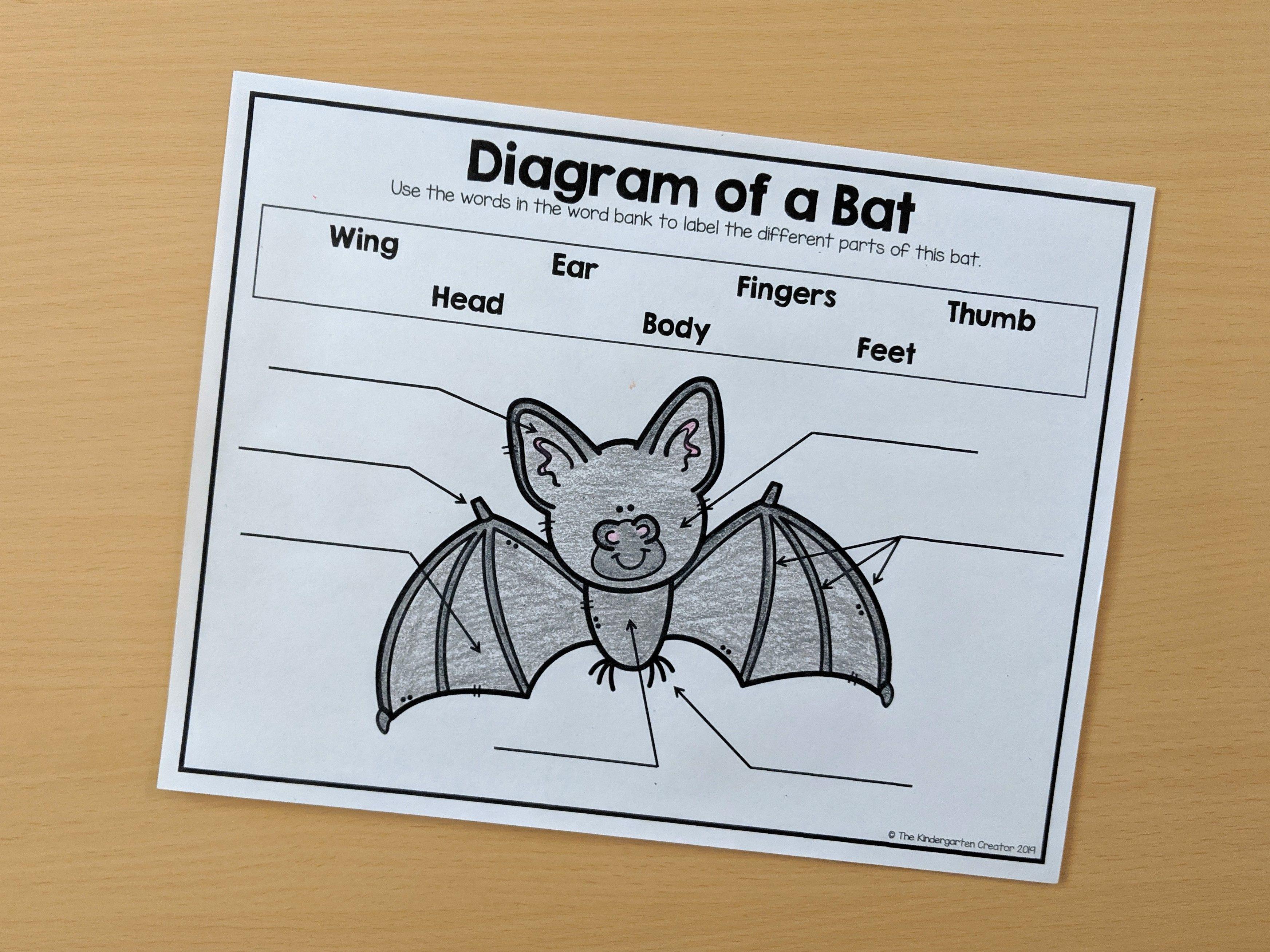 Diagram Of A Bat