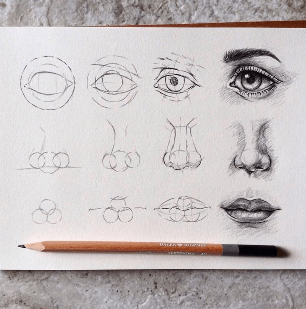 22 Drawing References for complete beginner artists