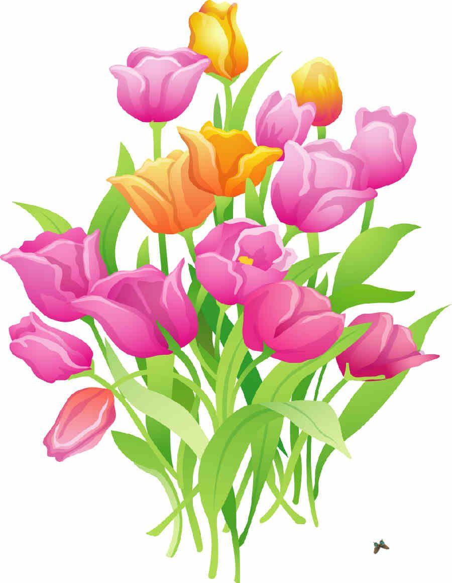 Flores De Primavera Flores Ramos De Flores Tulipan Flores