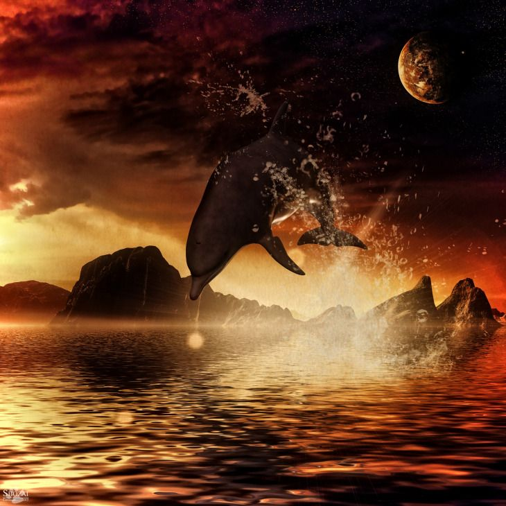 Mãe de golfinhos