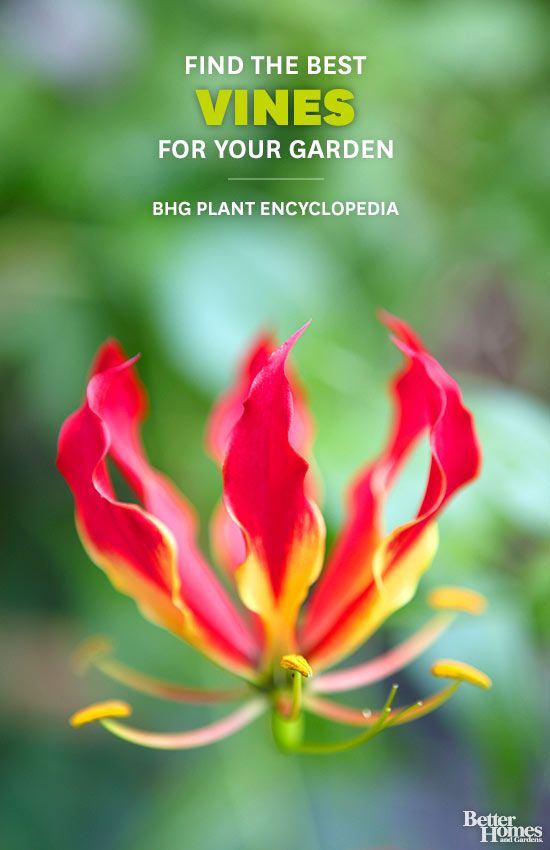Better Homes And Gardens Plant Encyclopedia