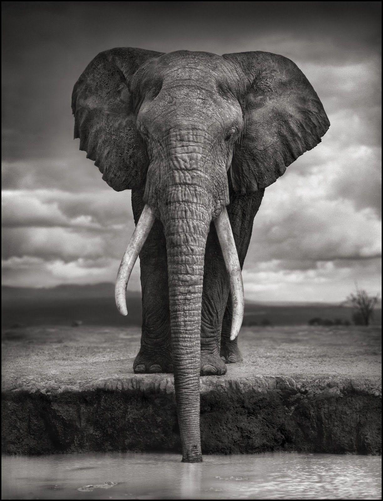 Nick Brandt Majestic Animal Portraits African wildlife