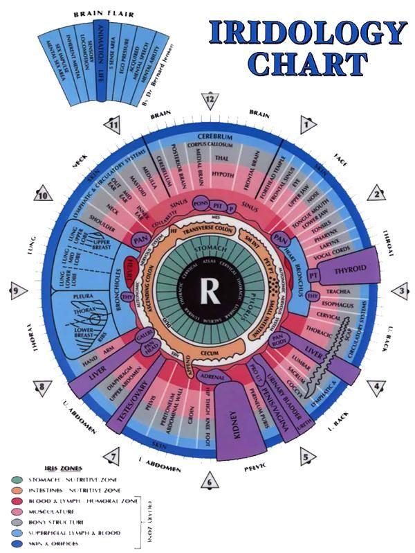 Iridology chart also for the iris of left eye defines many rh pinterest
