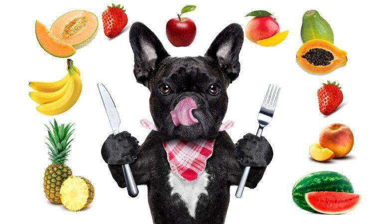 Los Alimentos Que Puede Comer Los Perros Búsqueda De Google Dogs Bulldog French Bulldog