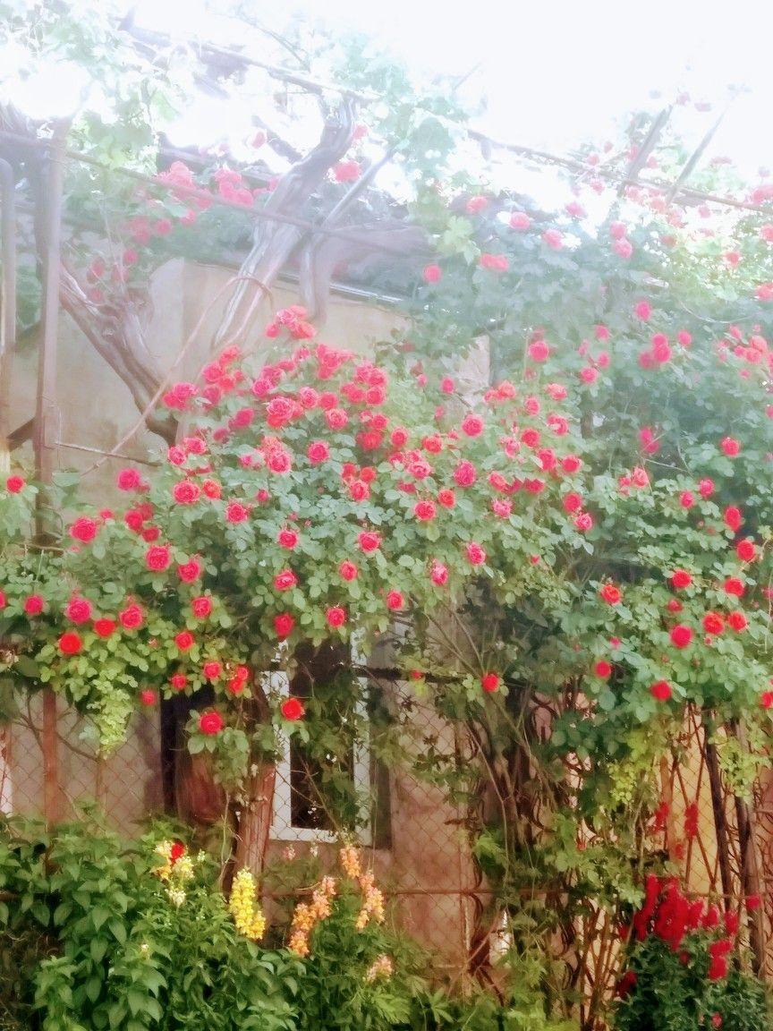 Old Yerevan Yerevan Plants Garden
