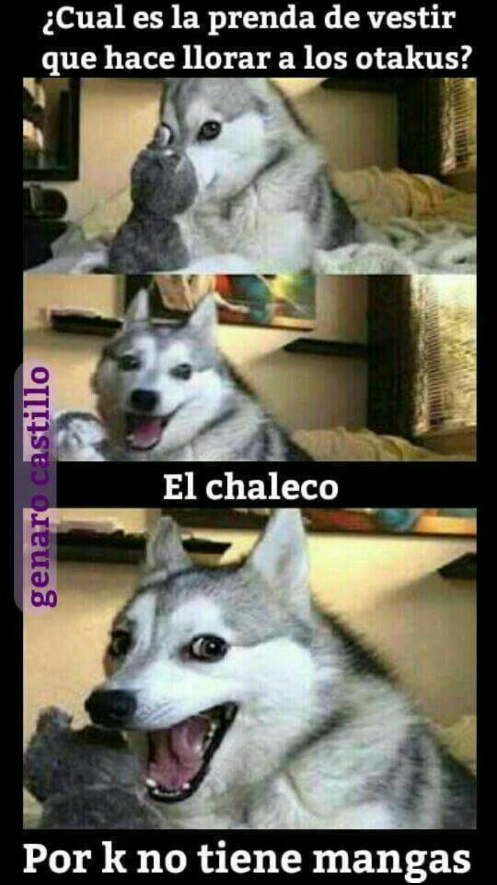 Pin De Anthonijesusjaimelacruz En Momoz Otakus Humor De Perros Memes Divertidos Memes De Animales Divertidos