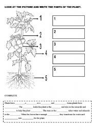 english worksheet plants stuff to buy pinterest worksheets. Black Bedroom Furniture Sets. Home Design Ideas