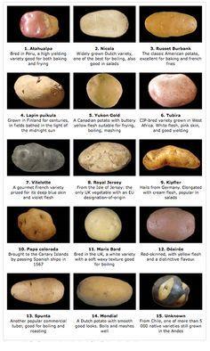 variety potatoes - Google zoeken
