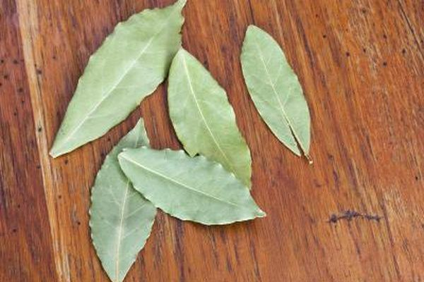 How To Get Rid Of Scratches On Glasses >> How to Get Rid of Mice With Cotton Balls & Vinegar | Getting rid of mice, Plant leaves, Bay leaves