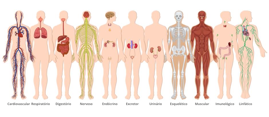 Pin de Mariana Hernàndez en Salud y ejercicio | Pinterest | Anatomía ...