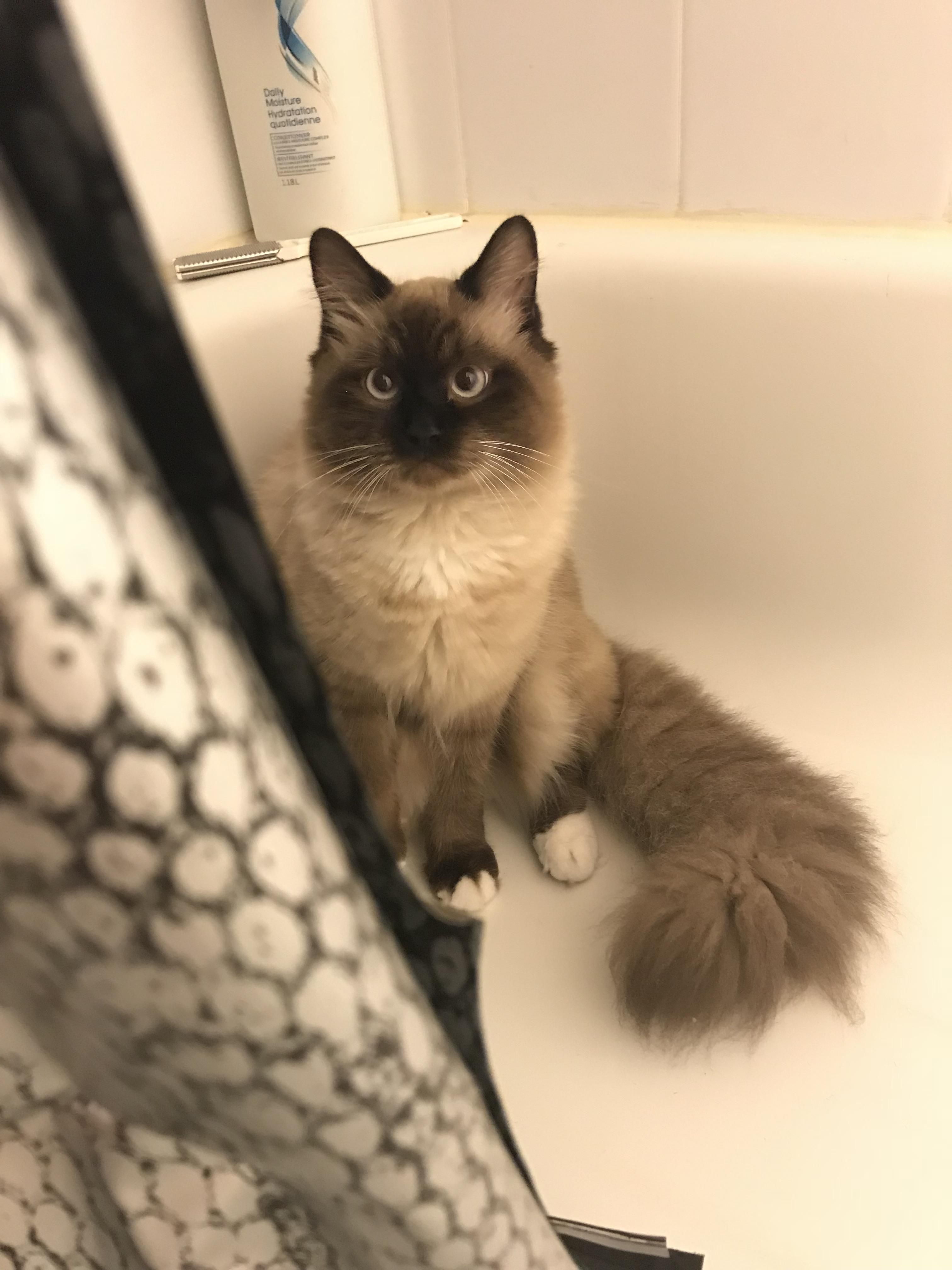 Henry Likes To Sit In The Tub And Stare Until