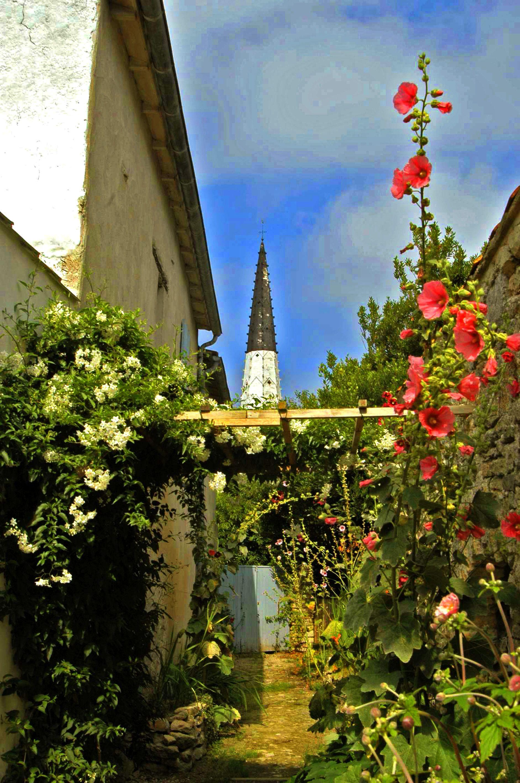 Venelle ars en r d couvrez les charmantes petites ruelles de l 39 le de r bord es de roses - Office de tourisme ars en re ...
