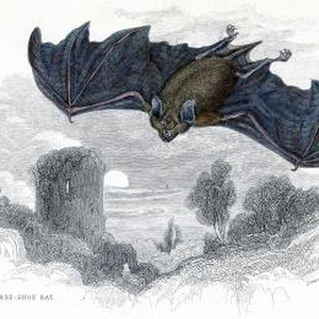 How To Get Rid Of Bats Roosting In Eaves Getting Rid Of Bats Hand Coloring Antiques