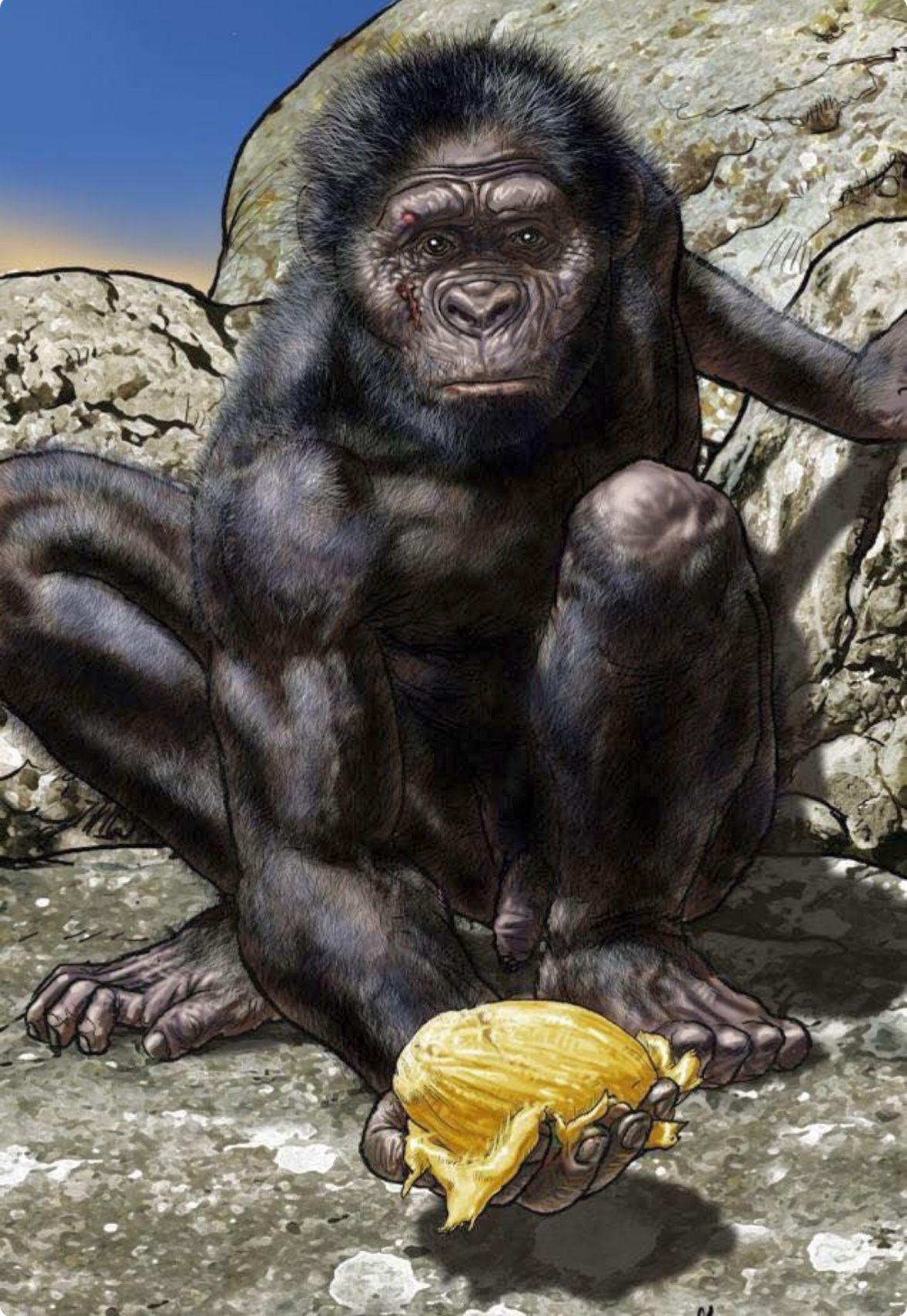 Hope Australopithecus Afarensis Lucy P Norbert