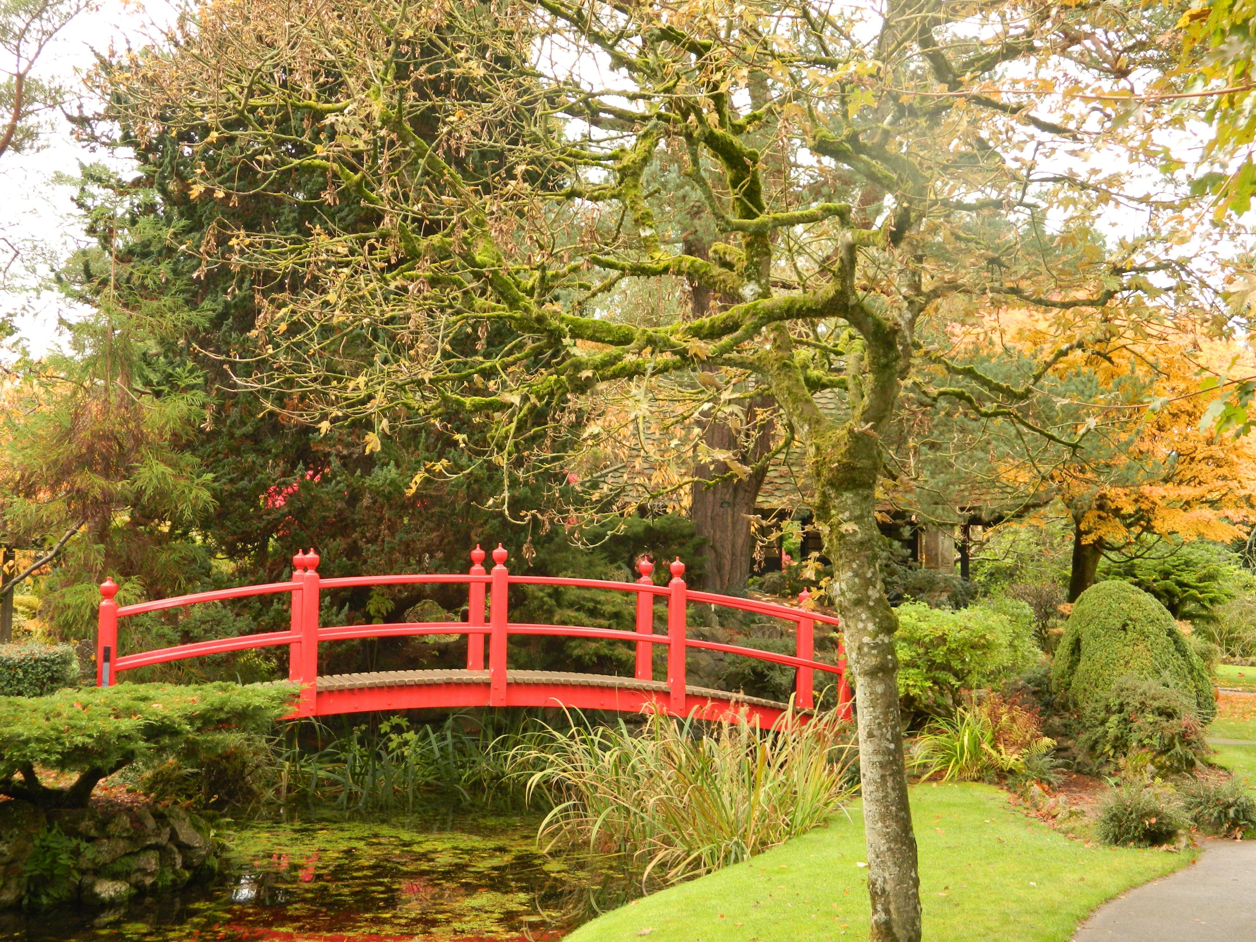 Red bridge in the Japanese Gardens | Autumn at the Irish National ...