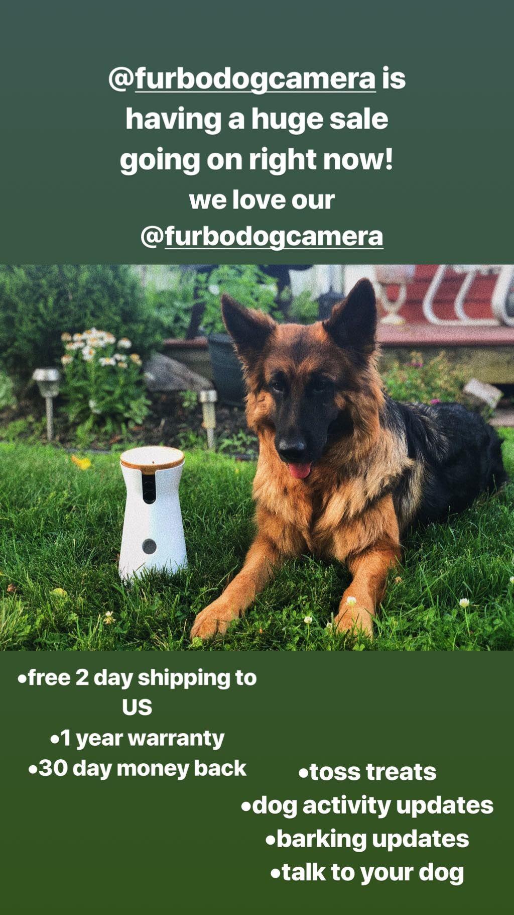 Treat Tossing Dog Camera 2 Way Audio Free Shipping German Shepherd Dog Health Care Dog Training Near Me