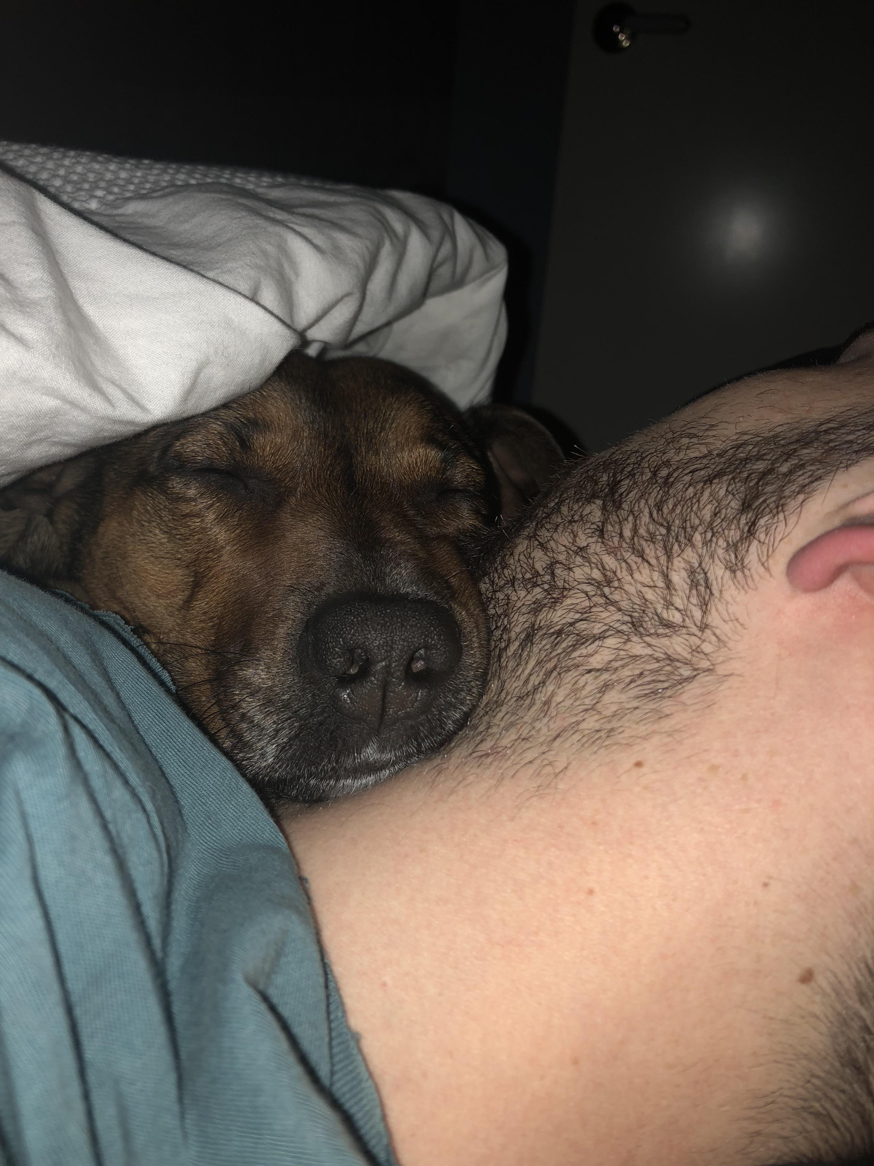 My Pup Fell Asleep On My Boyfriend Tonight Dogs Pets Dog Adopt