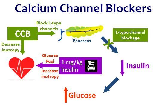 Calcium channel blockers (CCBs) decrease cardiac inotropy