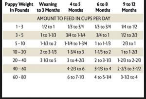 Puppy Feeding Chart Puppy Feeding Schedule Feeding Puppy Dog Care Tips