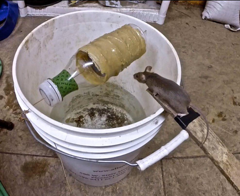 je d teste les rats et les souris voici un pi ge efficace astuces pinterest les rats la. Black Bedroom Furniture Sets. Home Design Ideas