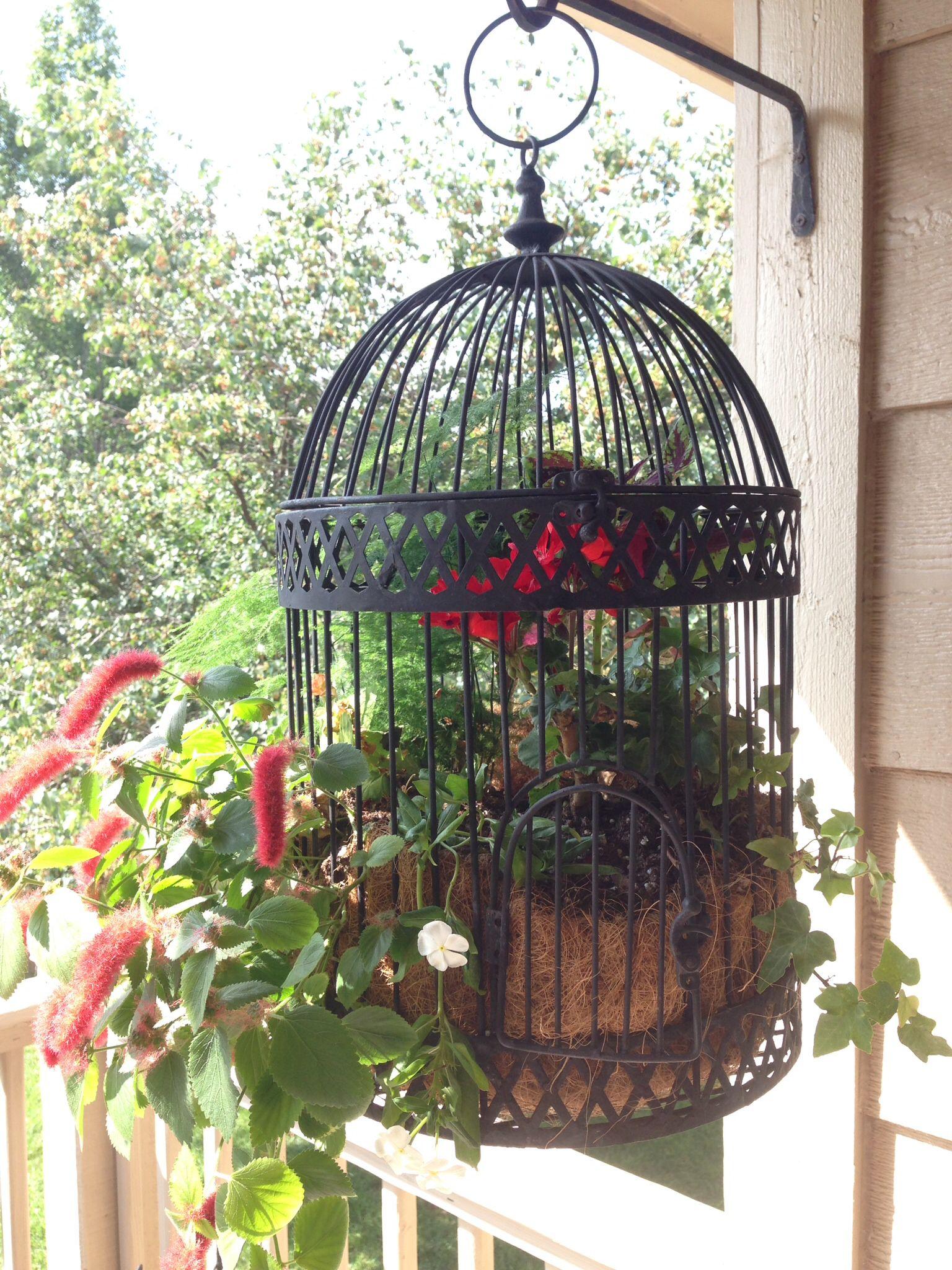 bird cage planter summer in the usa birdcage planter terranium ideas front porch landscape. Black Bedroom Furniture Sets. Home Design Ideas