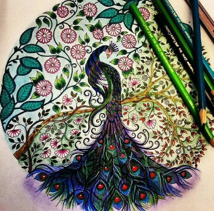 Secret Garden Johanna Basford Enchanted Florest Color Peacocks