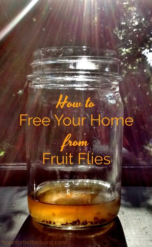 how to get rid of fruit flies in kitchen india