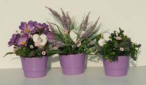 Znalezione Obrazy Dla Zapytania Kwiaty Doniczkowe Do Ciemnych Pomieszczen Flowers Plants