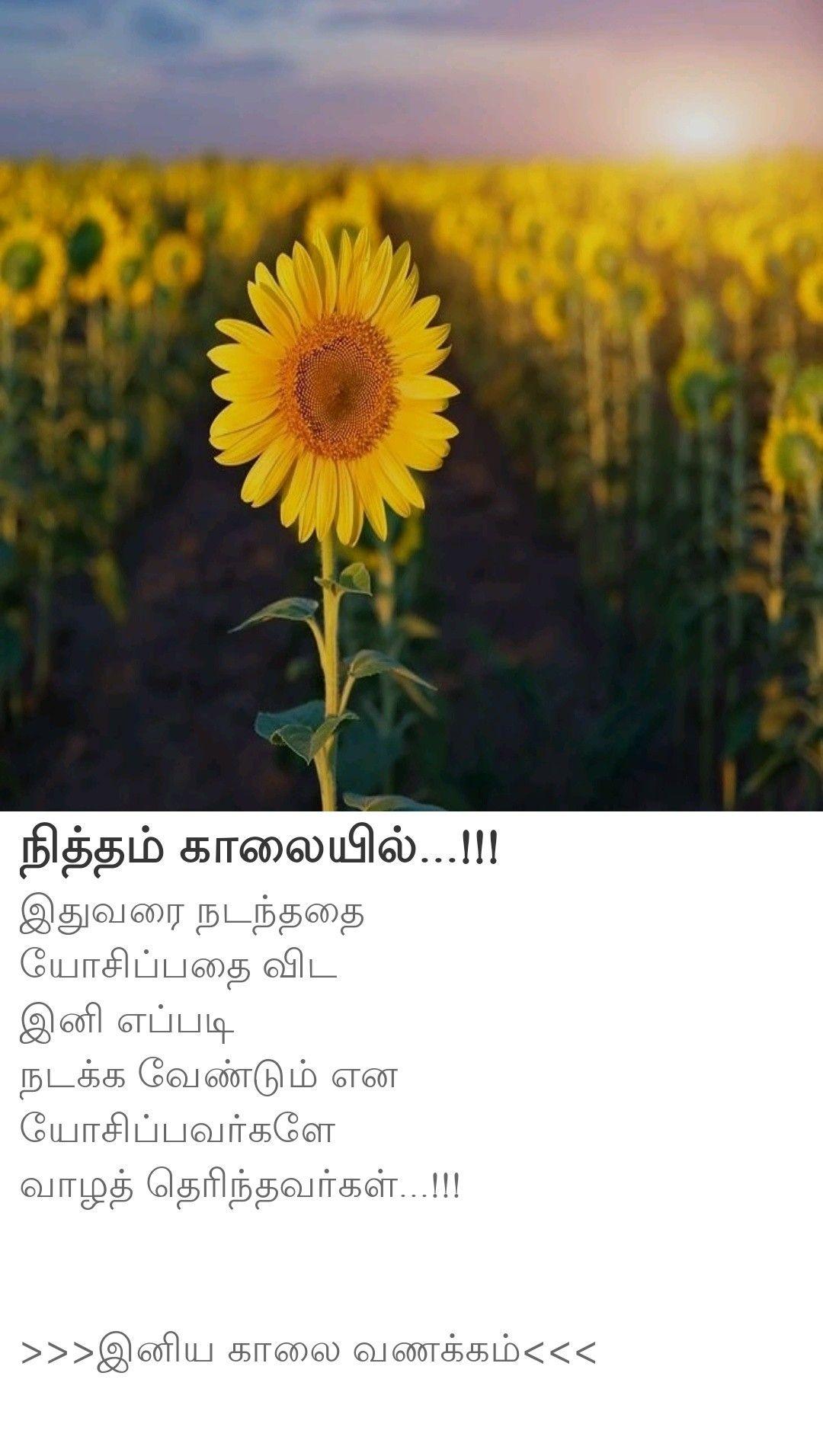 Pin By Ezhilchezhiyan On Wishes In 2020 Plants Flowers Dandelion