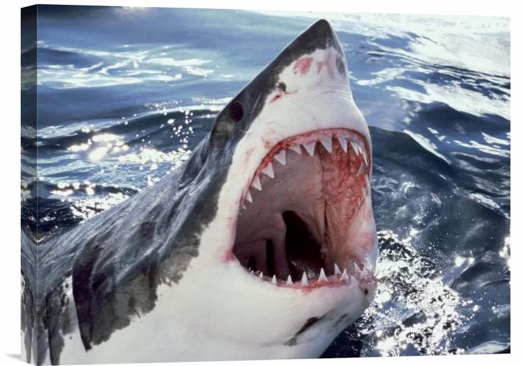 Pin By Jana Nova Kova On Cool Stuff Shark Pictures Great White Shark White Sharks