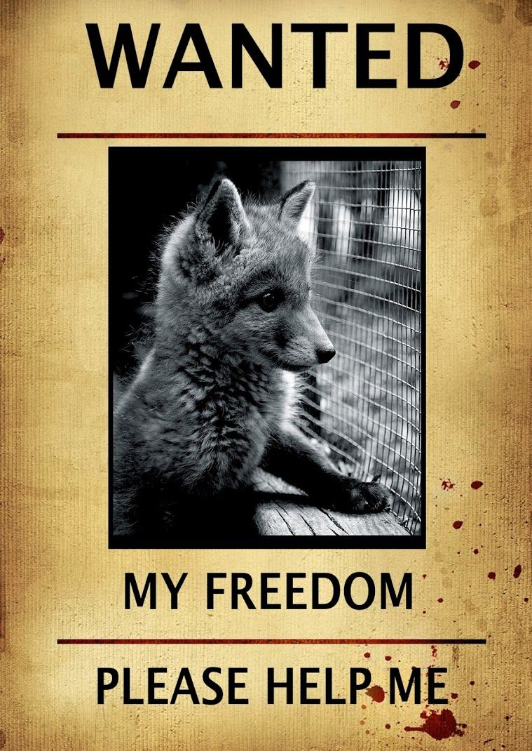 Stop Animal Abuse Plus Don T Wear Real Fur Animal Protection