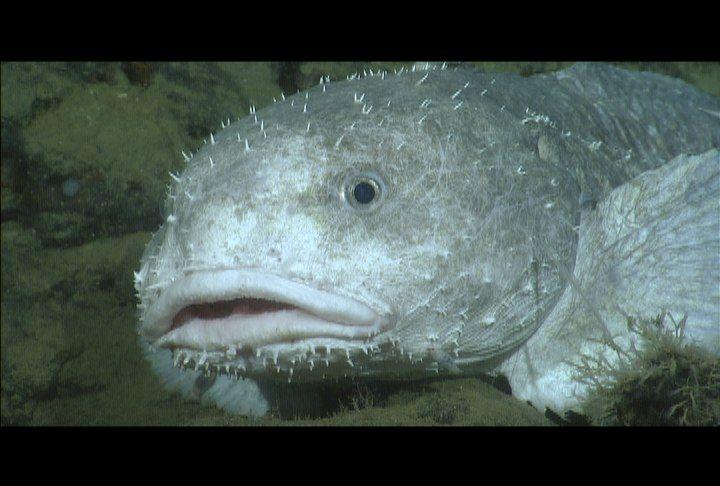 Blob Fish In Water Water Ionizer