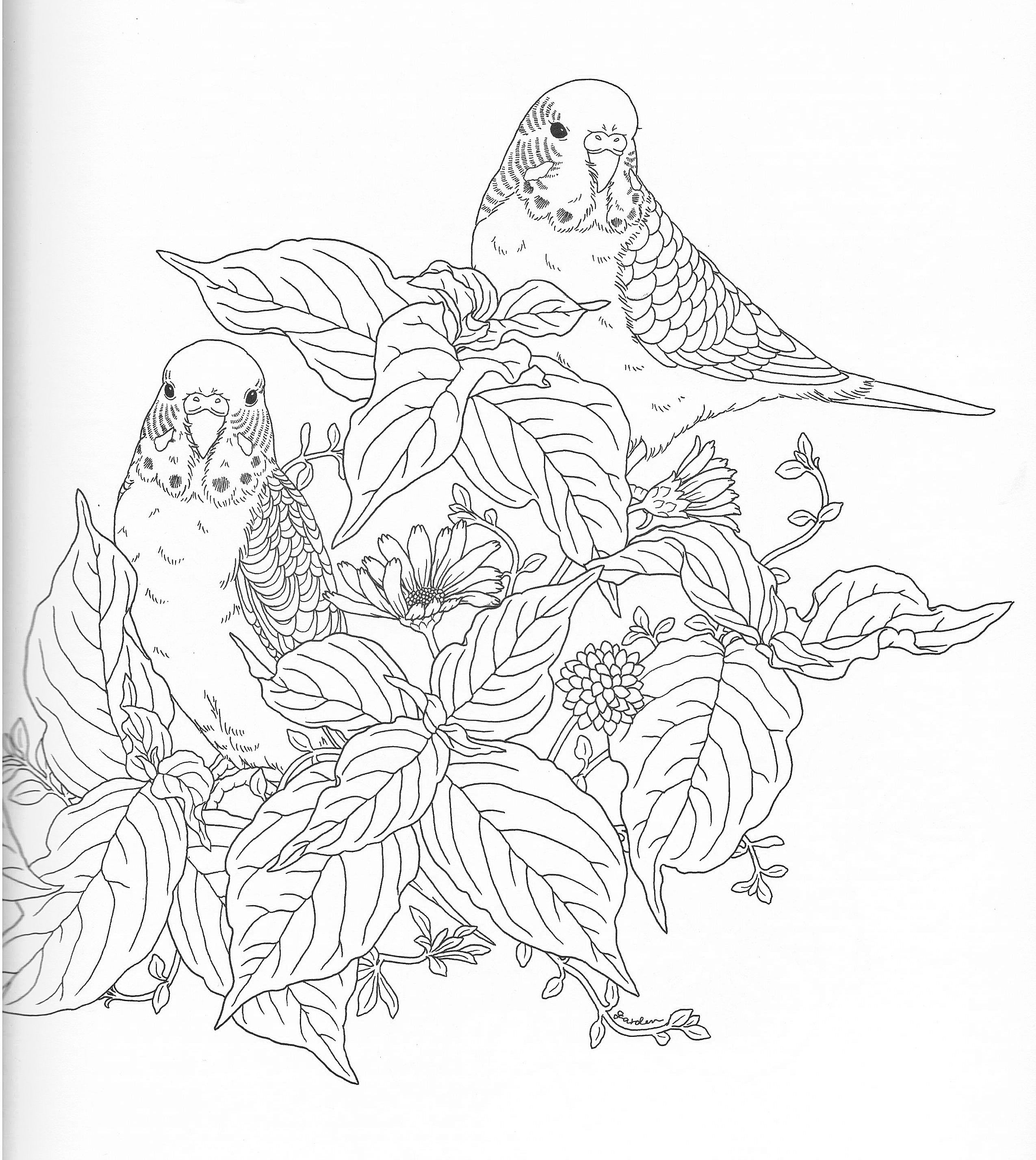 Harmony Of Nature Adult Coloring Book Pg 10