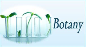 CrazyforStudy presents fast and trustworthy online Botany assignment  writing service by  proficient writers at the prices within your means.