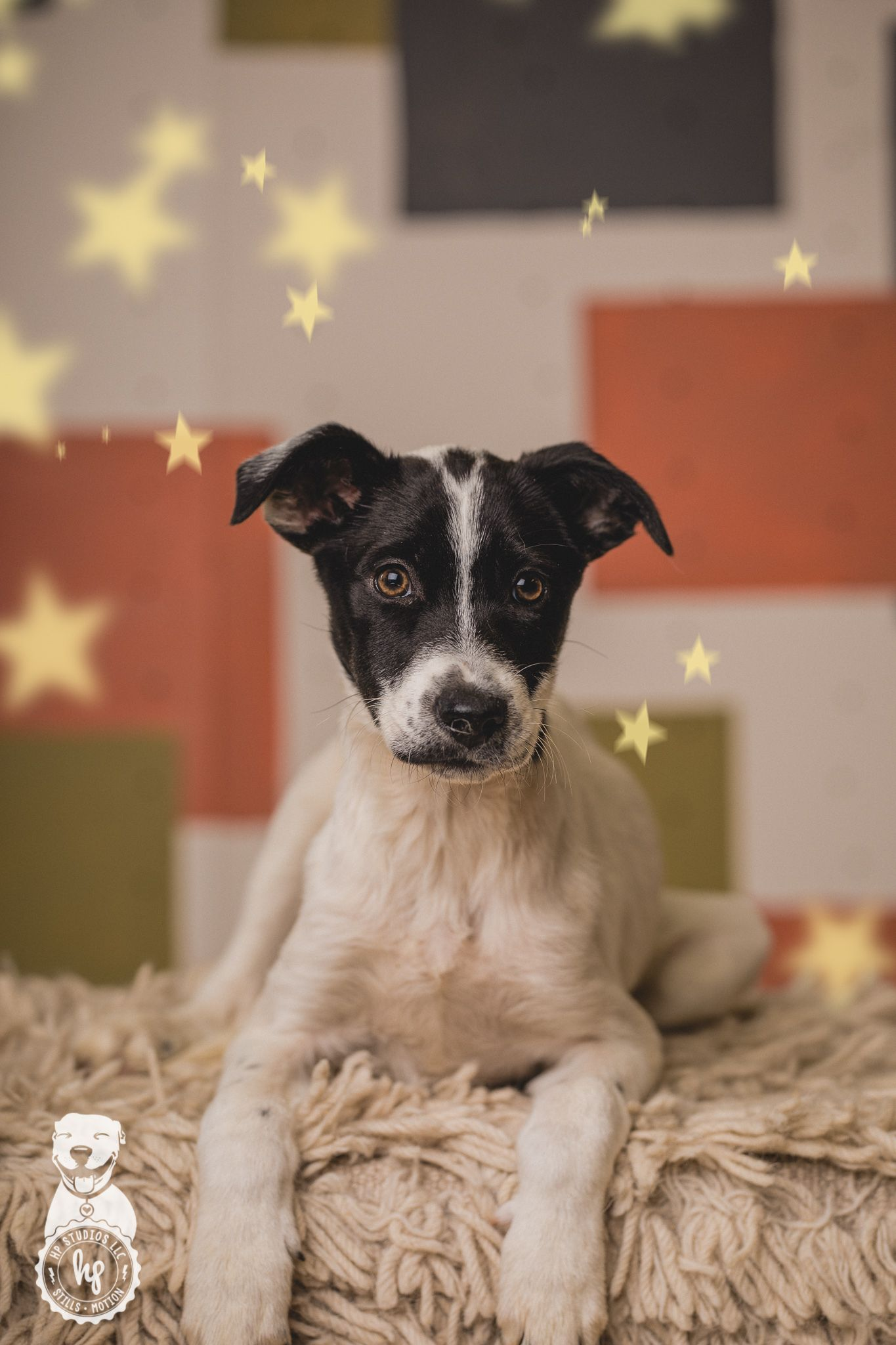 Adopt Abra on Family dogs, Little puppies, Pet search