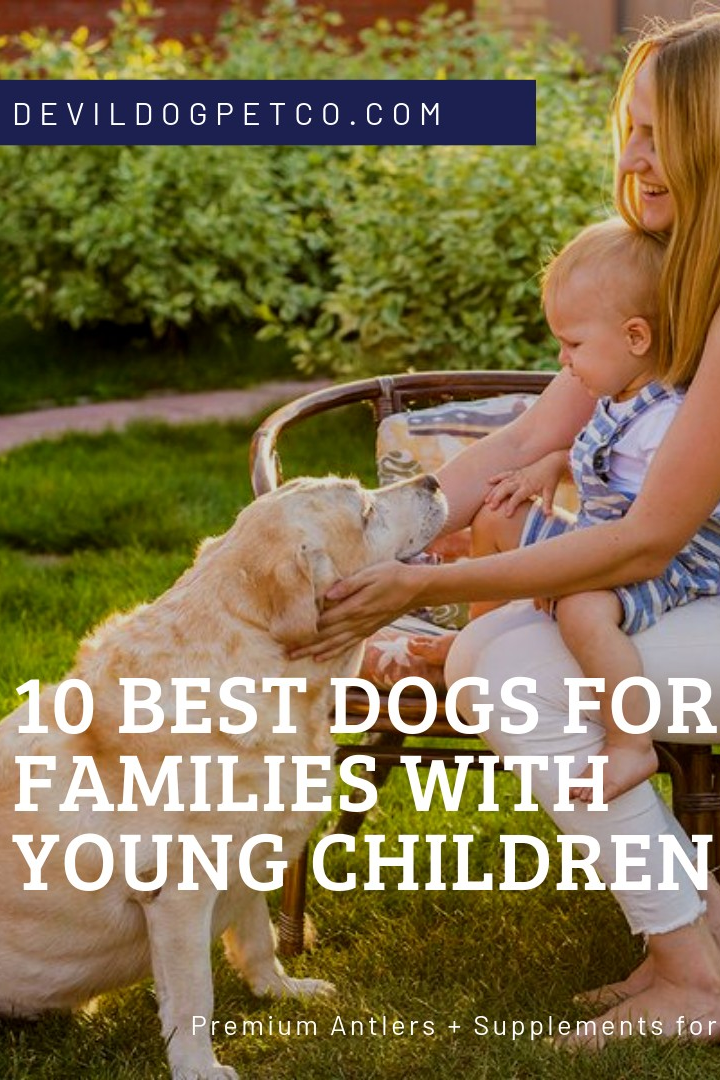 // dogblog // 10 BEST DOGS FOR FAMILIES WITH YOUNG