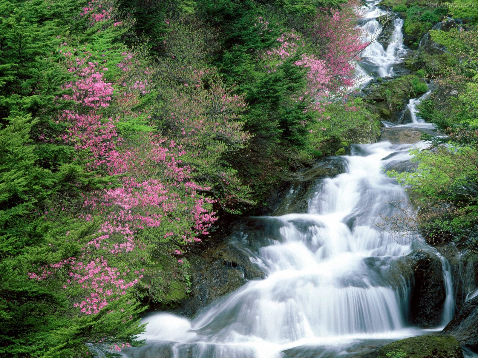 Images Of Waterfalls And Flowers
