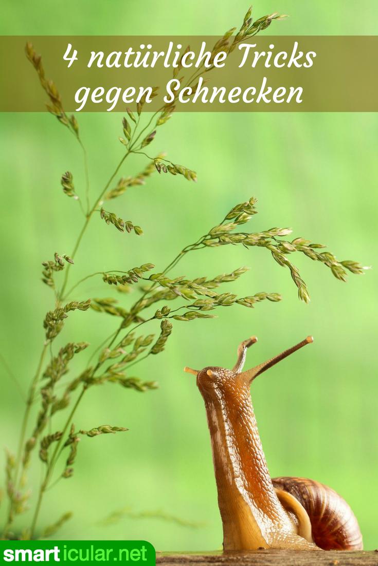 Mit Diesen Tricks Meiden Schnecken Deine Gemusebeete Schnecken Im Garten Garten Pflanzen Garten Bepflanzen