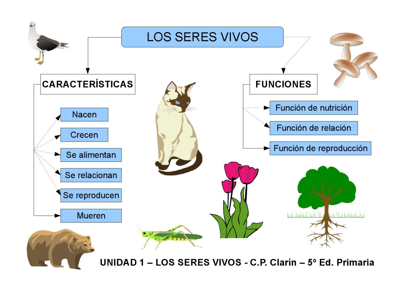 Mapa conceptual que muestra el esquema de las funciones y características de los seres vivos.