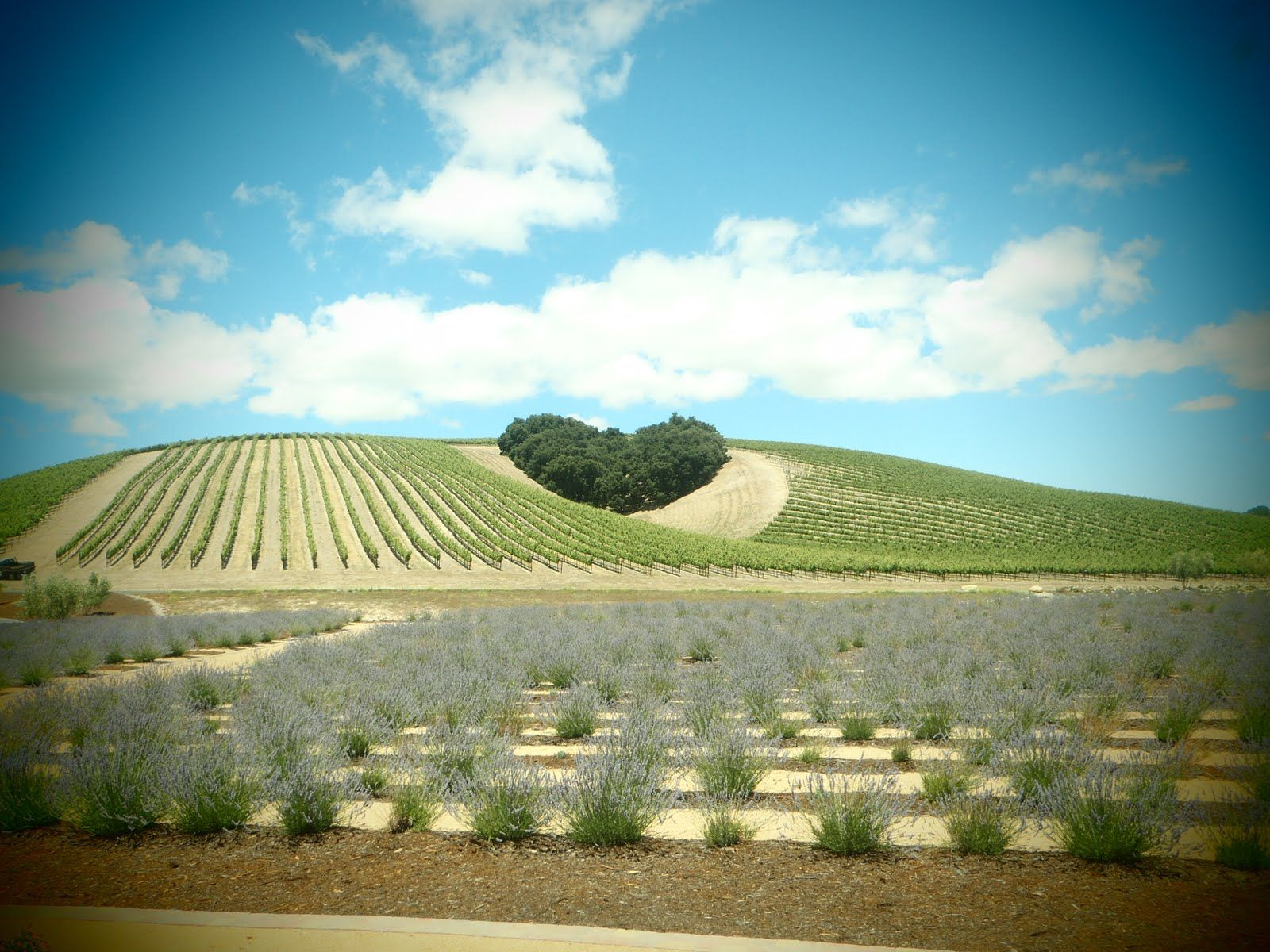Heart Hill At Niner Winery Paso Robles Ca Personalized Wine