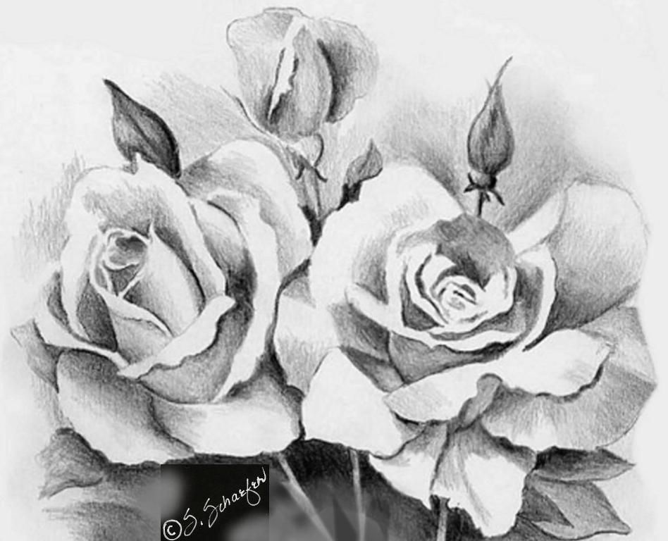 Beautiful sketches of flowers beautiful rose flower bouquet for your loved ones valentine roses