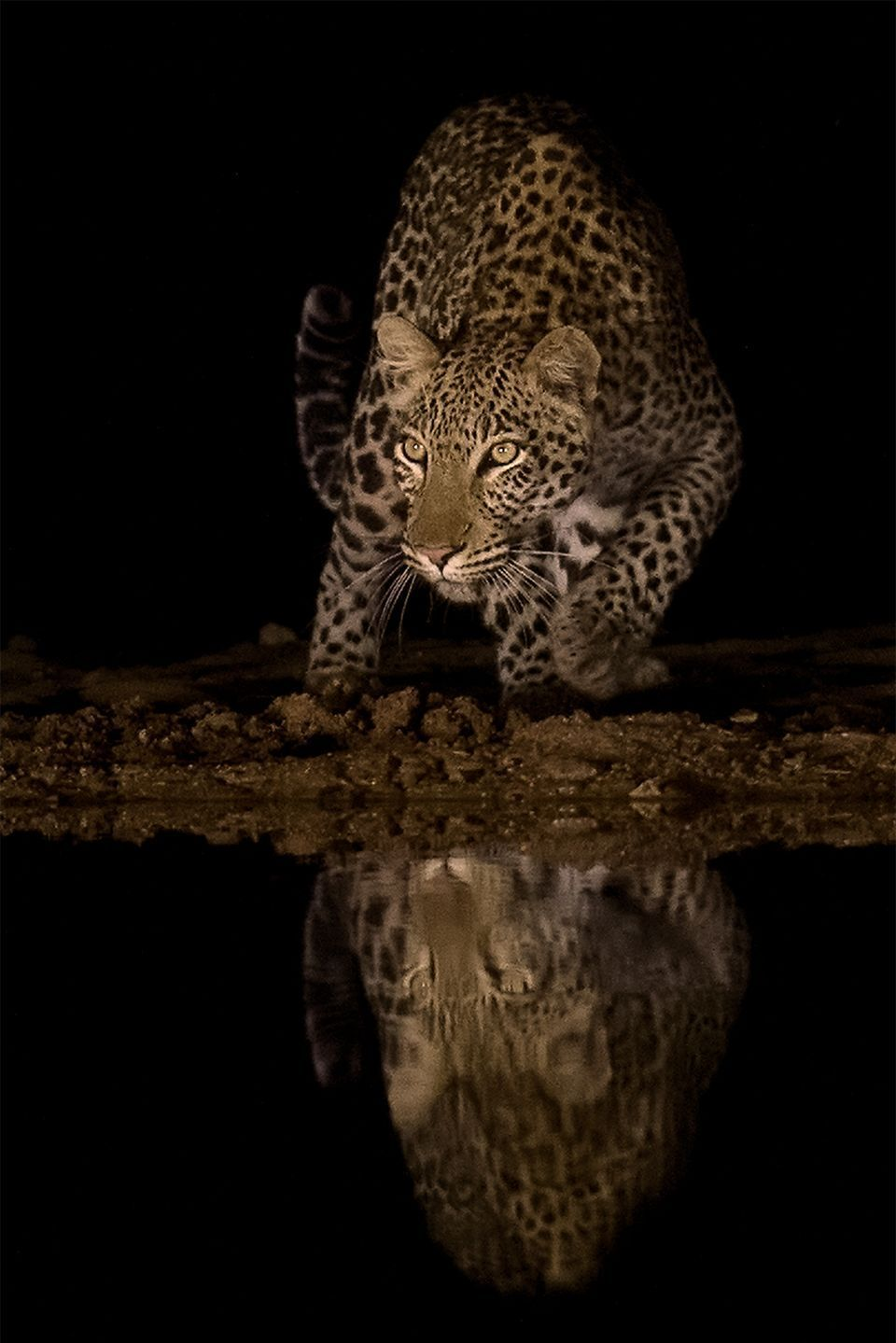 National Geographic Nature Photographer Of The Year 2017 2017 National Geographic Nature Photographer Of The Year Winners