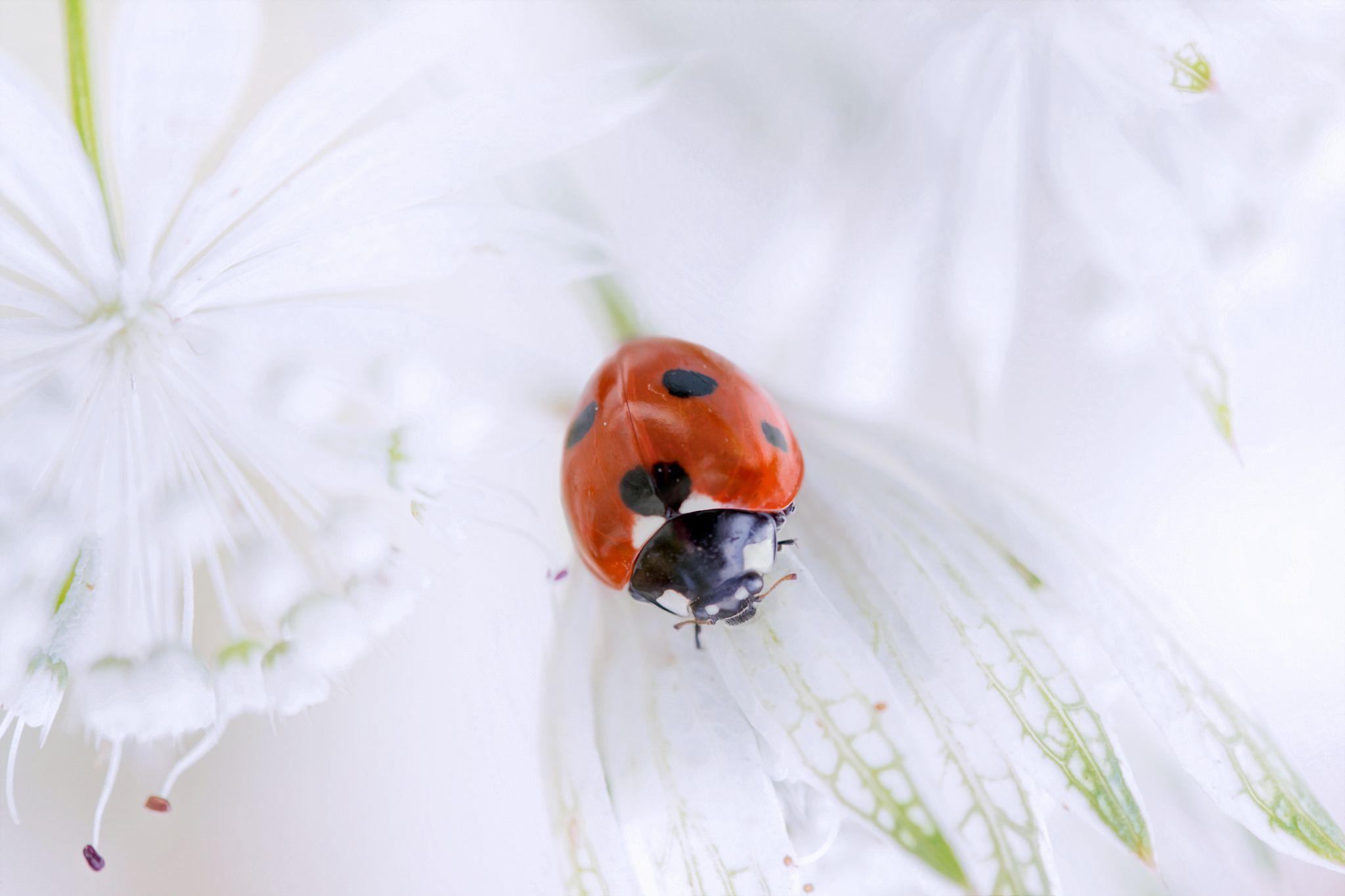 Открытки цветы с божьей коровкой