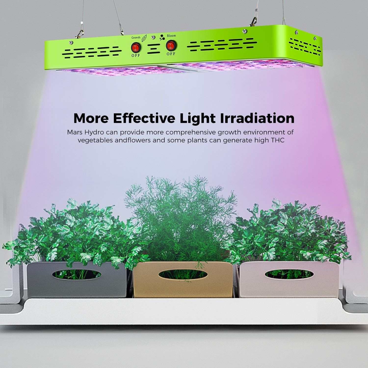 Bonsai Led Grow Light Pictures Bonsai Gallery Led Grow Light Bulbs Led Grow Lights Led Grow