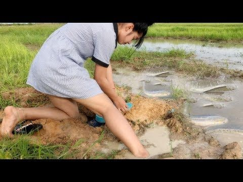plastic bottle mouse traps in cambodia how to catch rat by trap in